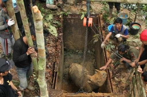 Conservationists handle a Sumatran rhino at a sanctuary in Kutai, East Kalimantan