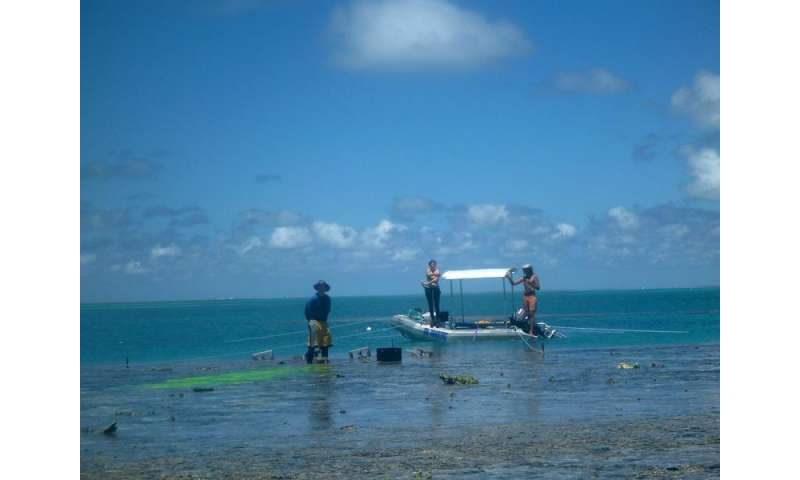 Ocean acidification slowing coral reef growth