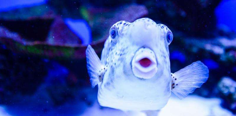 Researchers consider whether fish have feelings
