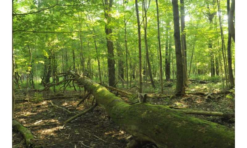 A carbon sink that can't be filled
