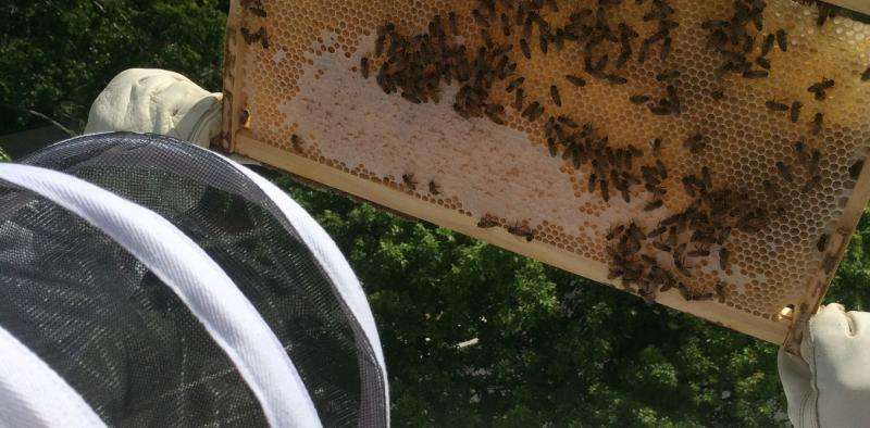 A digital beehive could warn beekeepers when their hives are under attack