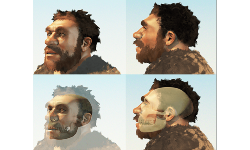 A reconstruction of a male our evolutionary cousin the Neanderthals (Modified from an image by Cicero Moraes). Credit: Wikimedia Commons, CC BY-SA