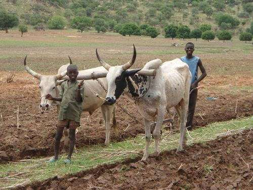 Agricultural expansion in Africa could spark unforeseen climate change