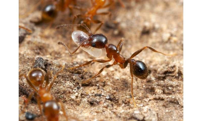 Ants don't get Alzheimer's