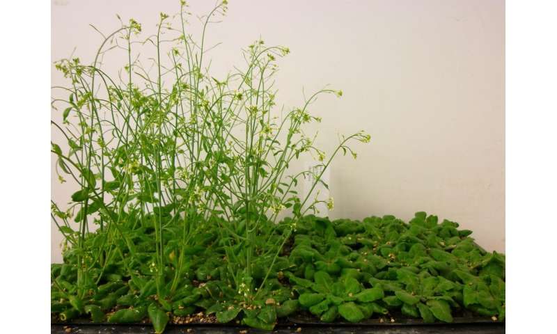 A step closer to understanding the 'switch' that triggers flowering in plants