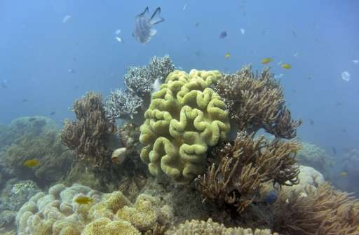 Australia's Great Barrier Reef is at greater risk than previously thought of dissolving as climate change renders the oceans mor