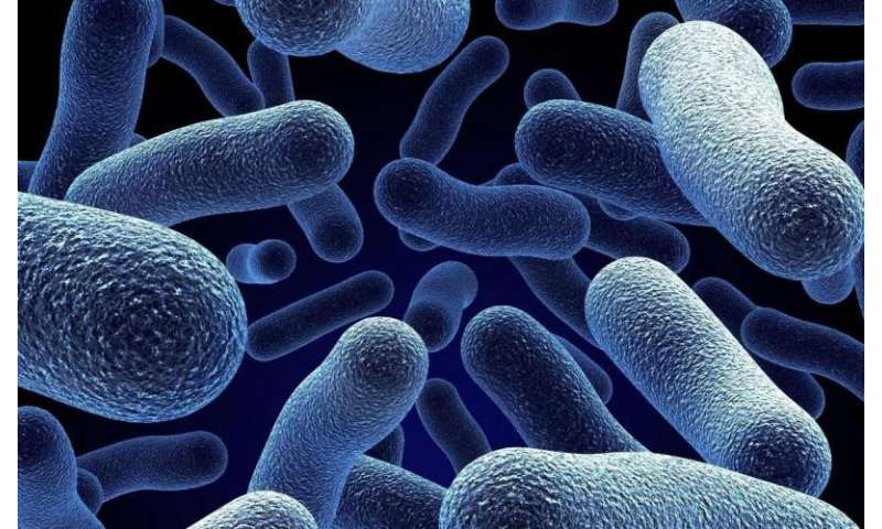 Bacteria of the microflora in the intestine