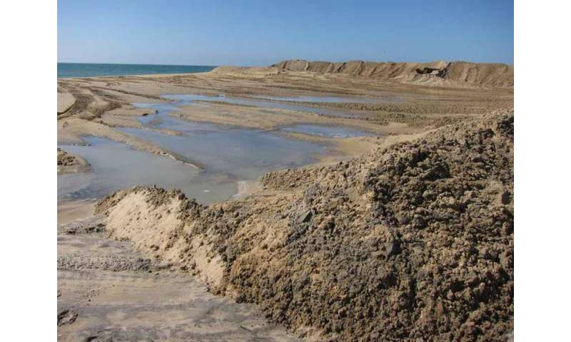 Beach replenishment may have 'far reaching' impacts on ecosystems