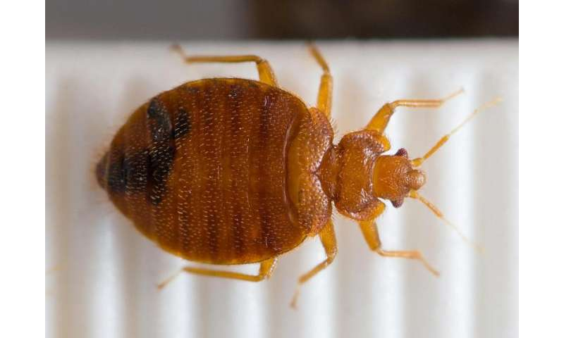 Bed bug genome uncovers biology of a pest on the rebound