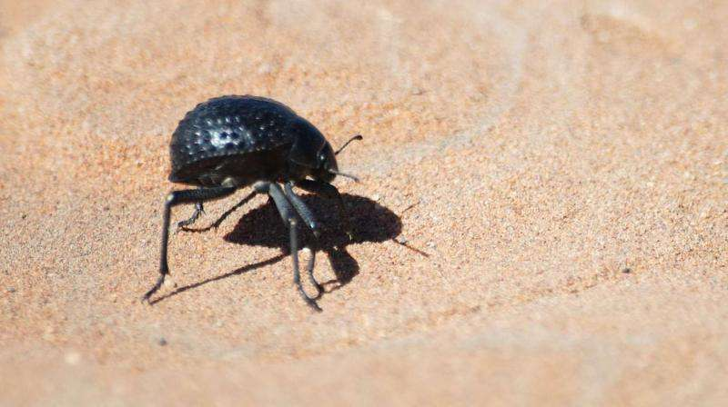 Beetle-inspired discovery could reduce frost's costly sting
