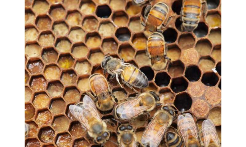 Bee virus spread manmade and emanates from Europe