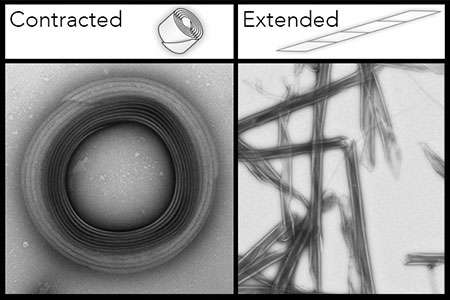 Breaking cell barriers with retractable protein nanoneedles