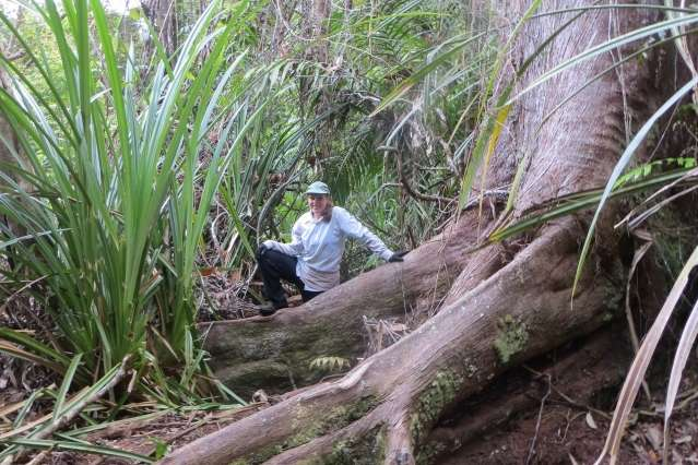 Carbon cycling in the peat swamp forests of Borneo