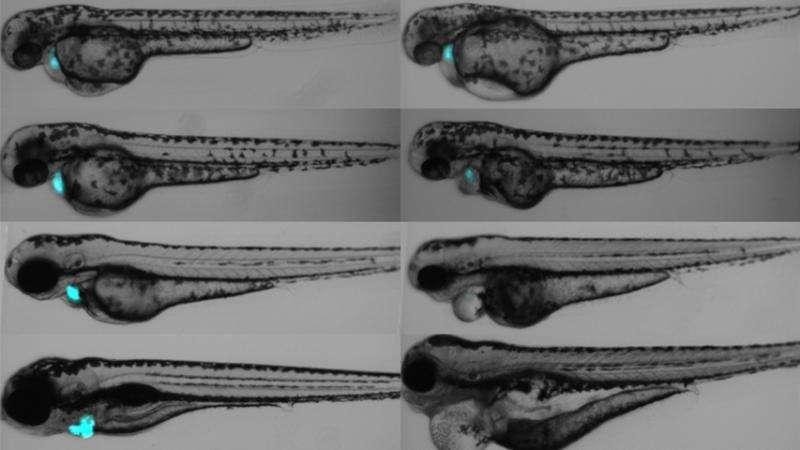 Carnegie Mellon team develops targeted photosensitizer for cell manipulation