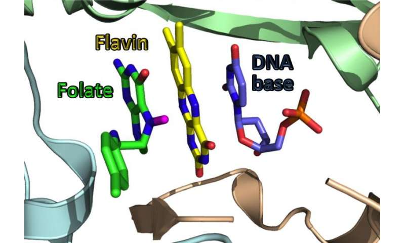 Chemists uncover how key agent allows diseases to reproduce