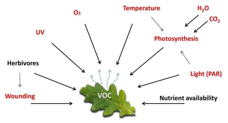 Tox Town - Volatile Organic Compounds (VOCs) - Toxic ...