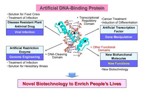 Designer DNA-binding proteins to combat viral infections in agriculture and medicine