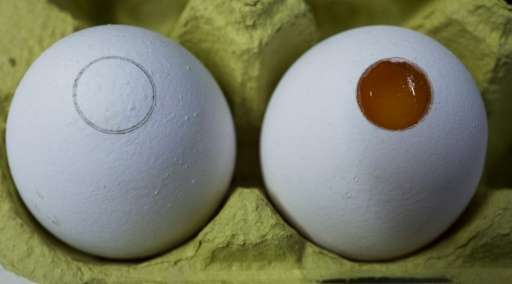 eggspictured - German scientists seek way to end live chick shredding - Science and Research
