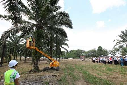 Electric E-Cutter can reach oil palm trees as high as 30 feet