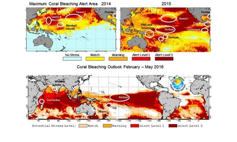 El Niño prolongs longest global coral bleaching event