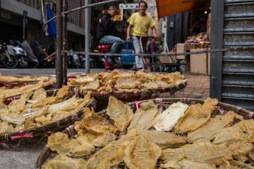 Mexico fights to save species ensnared in China black market