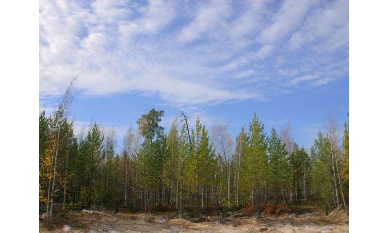 Flourishing vegetation increases carbon dioxide amplitude