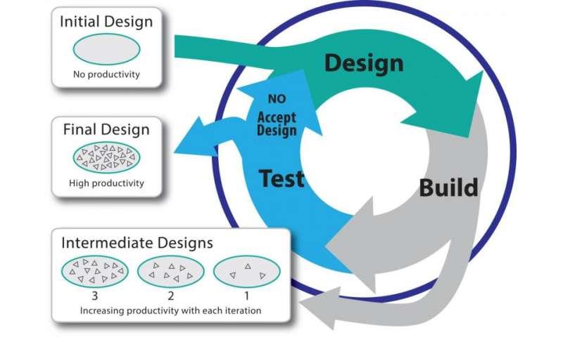Fluorescent biosensors light up high-throughput metabolic engineering
