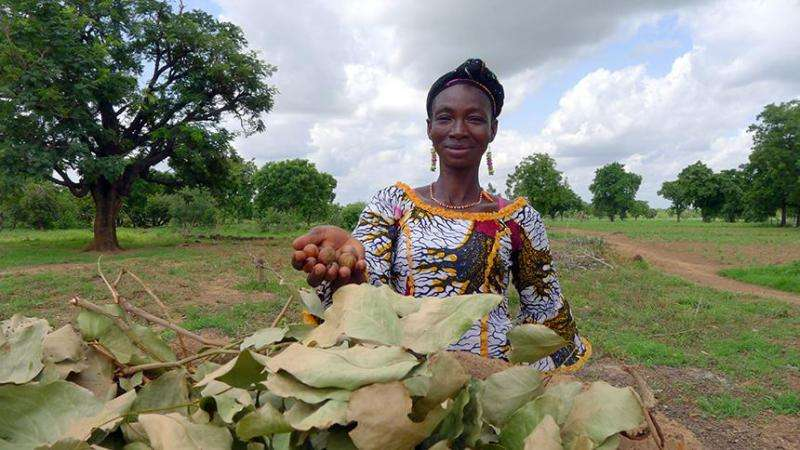 Forgotten crops may hold key to nutritional security