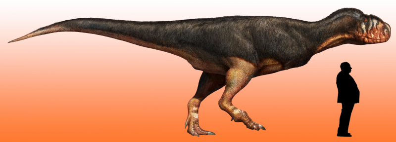 Fossil find reveals just how big carnivorous dinosaur may have grown