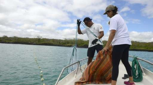 Galapagos National Park Marine Investigations team monitor shark activity in the area on June 5, 2013