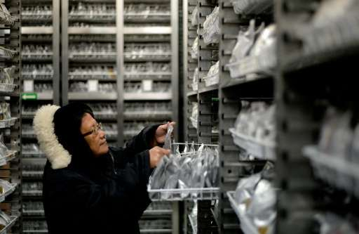 Gene bank manager Flora de Guzman checks rice samples at the International Rice Research Institute (IRRI) in Laguna, Philippines