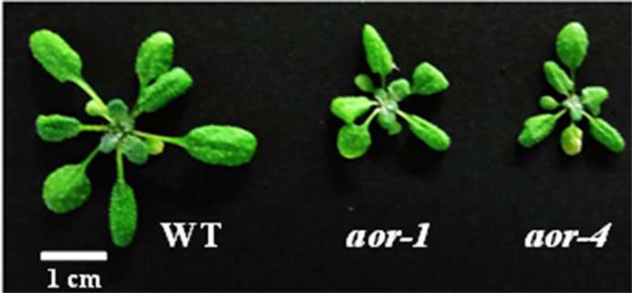 Gene protects against toxic byproducts of photosynthesis, helping plants to