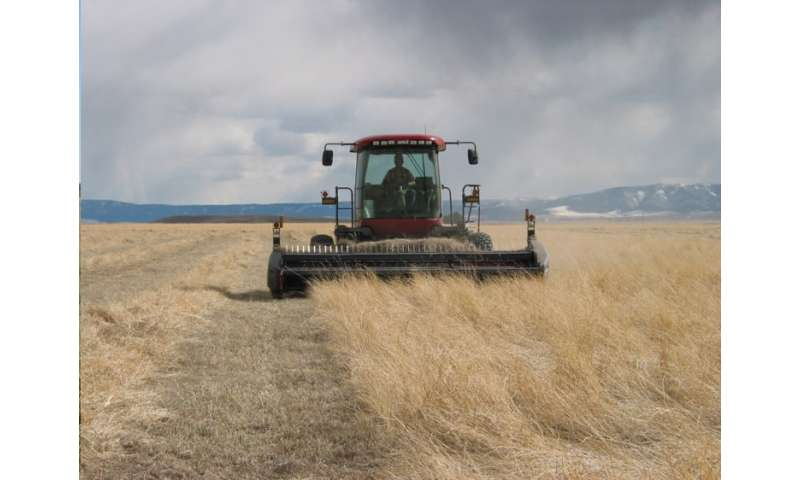 Grassland harvest could conserve resources, benefit farmers, and curb government spending