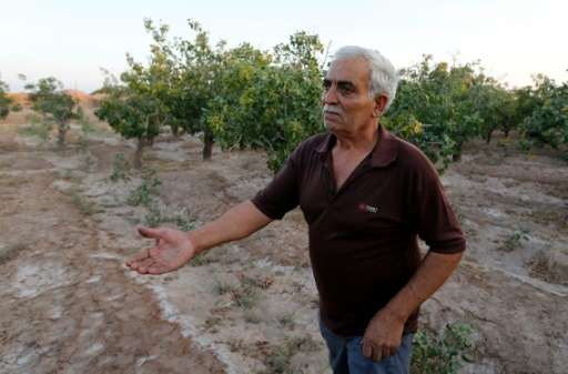 Hassan Ali Firouzabadi works at his pistachio farm in Izadabad, a village in the southern Iranian Kerman province