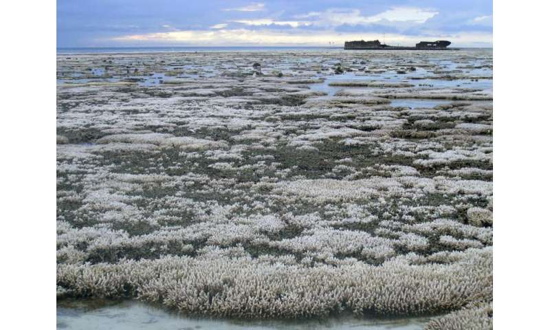 Herpes outbreak, other marine viruses linked to coral bleaching event