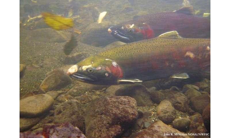 High-tech river studies reveal benefits of habitat restoration for fish