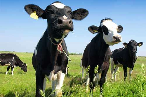 How can livestock produce food that is better for the people and the planet?