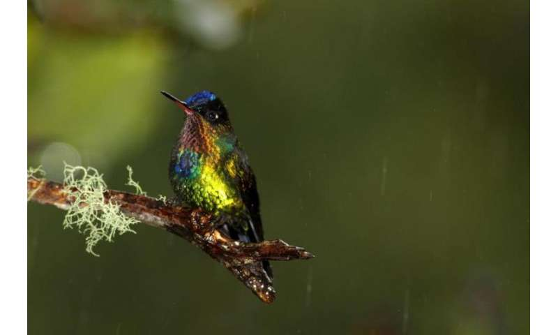Hummingbirds provide insight into food specialization across the Americas