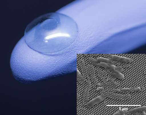 Insect wings inspire antibacterial surfaces for corneal transplants, other medical devices
