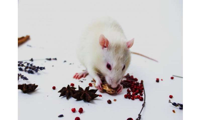 IU study shows first evidence for independent working memory systems in animals