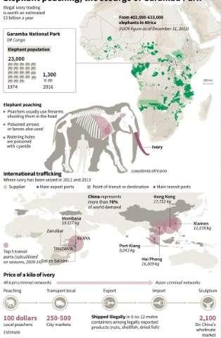 Ivory poaching, the scourge of Garamba Park