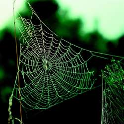 Light used to measure the 'big stretch' in spider silk proteins