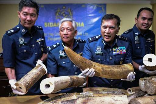 Malaysian customs officials display seized elephant tusks during a press conference in Sepang, outside Kuala Lumpur, on March 2,