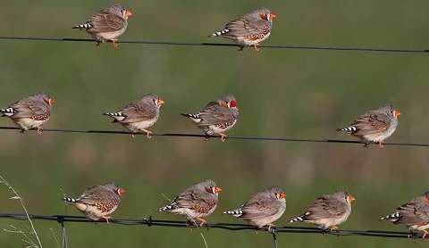Top 10 Best Singing Birds In The World