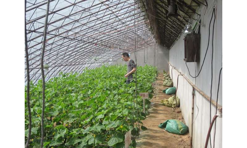 Manure applications elevate nitrogen accumulation and loss