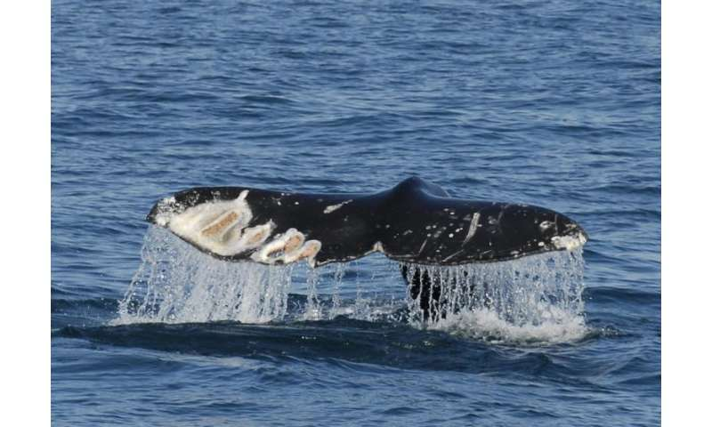 Marine vessel tracking system also a lifesaver for wildlife