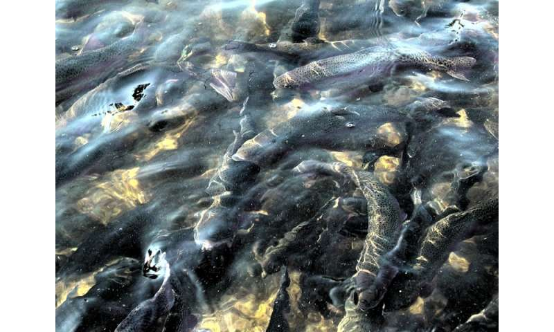 Mercury in fish affected by both prey type and quality for What fish has the most mercury