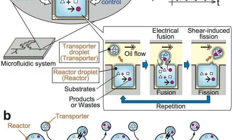 Microdroplet reactors mimic living systems