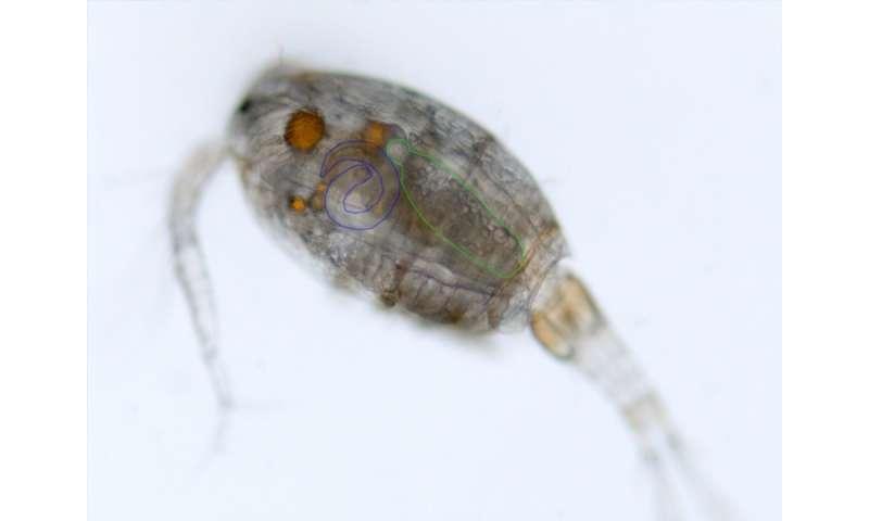 Mutual sabotage in parasites
