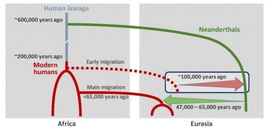 Scenario of interbreeding between modern humans and Neanderthals: Neanderthal DNA in present-day humans outside Africa originates from interbreeding that occurred 47,000 - 65,000 years ago (green arrow). Modern human DNA in Neanderthals is likely a consequence of earlier contact between the two groups roughly 100,000 years ago (red arrow). Credit: © Ilan Gronau